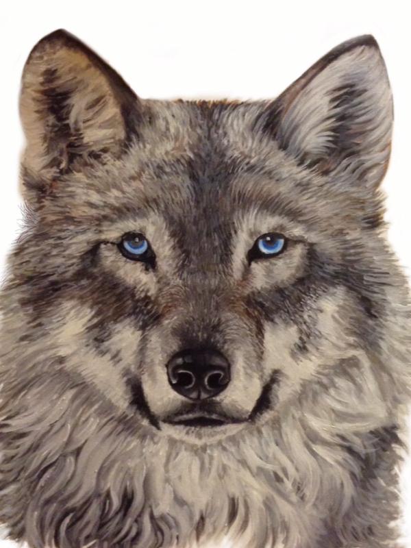 Wolf on White