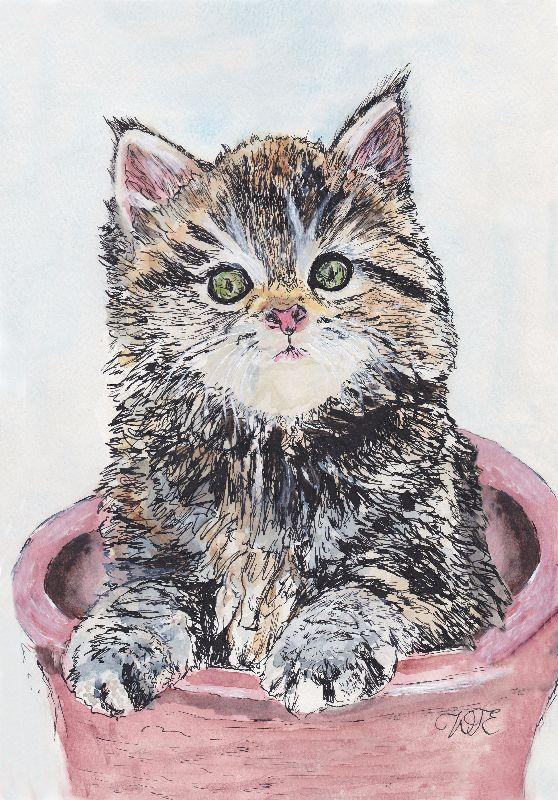 Kitten in plantpot