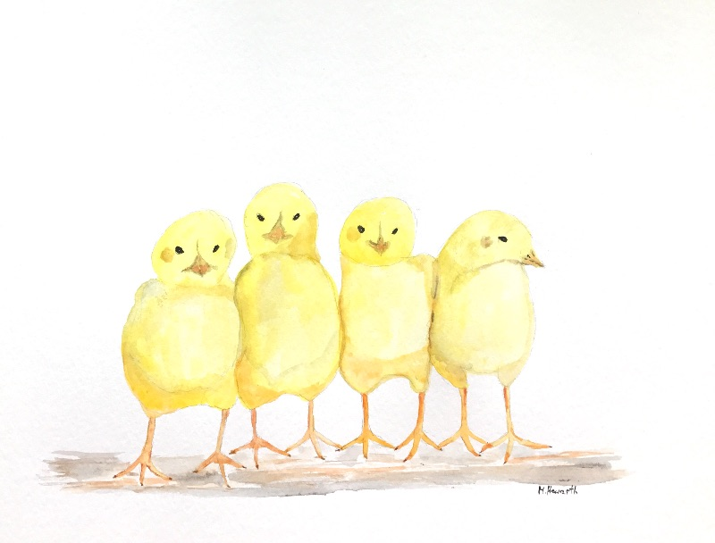 Chicks birds Easter