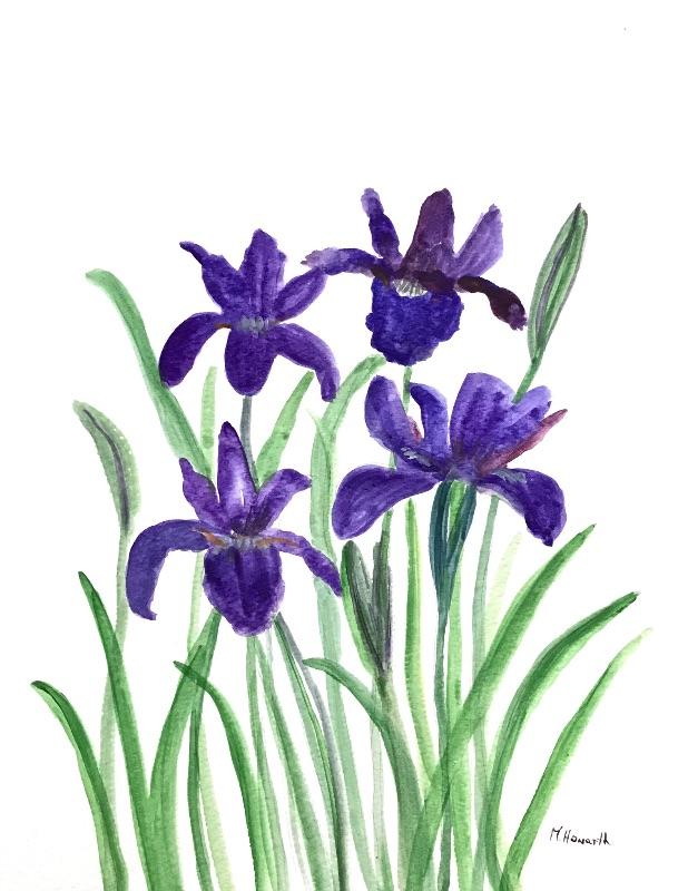 Irises flowers purple