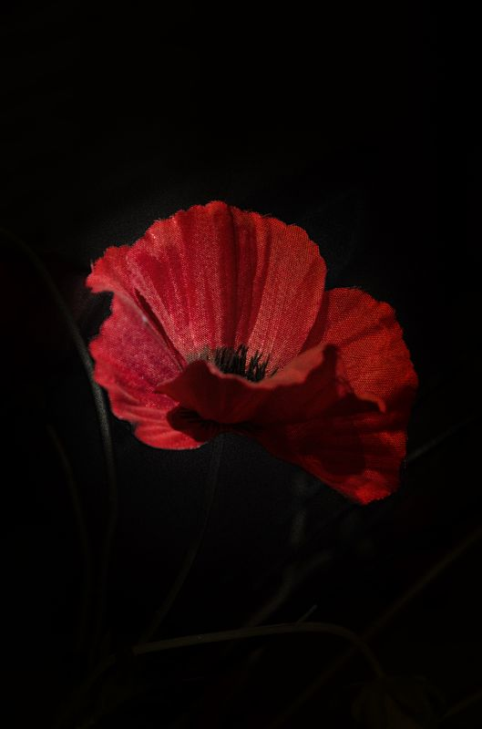 Remembrance poppy 1