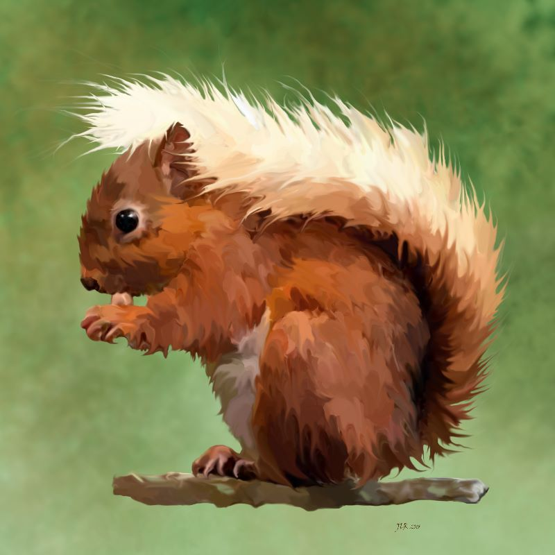 Scruffy Squirrel