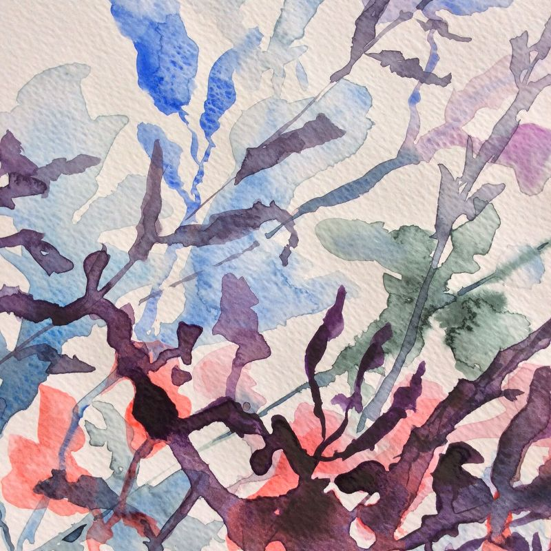 Watercolour seaweed