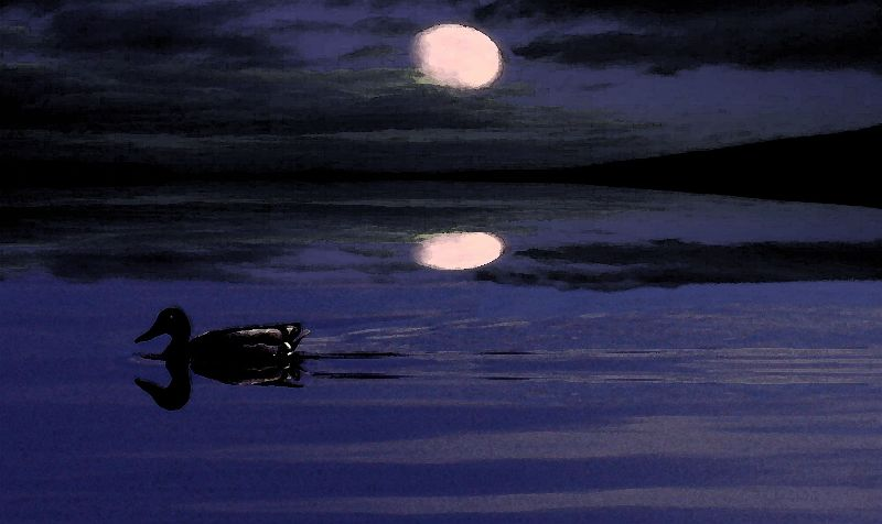 Mallards Midnight Swim