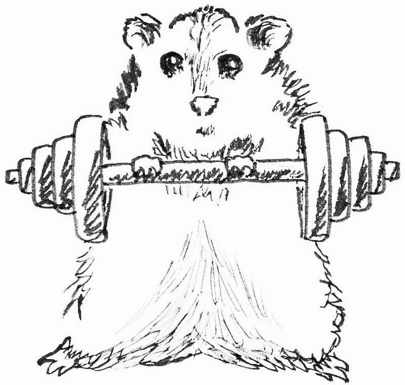Hamster Workout