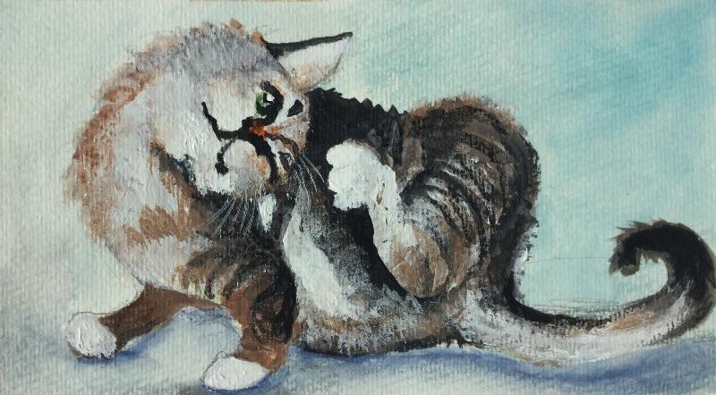 Scratchy cat