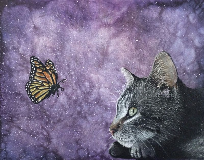 Butterfly Kitty