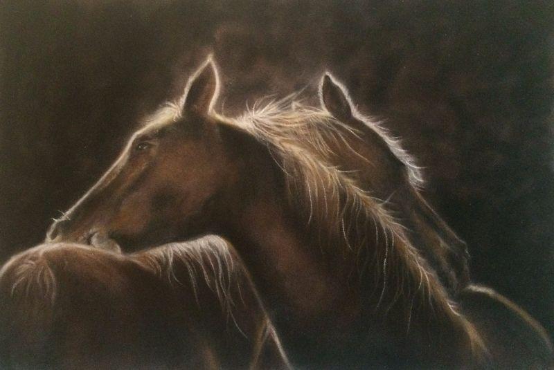 Companionship Horses
