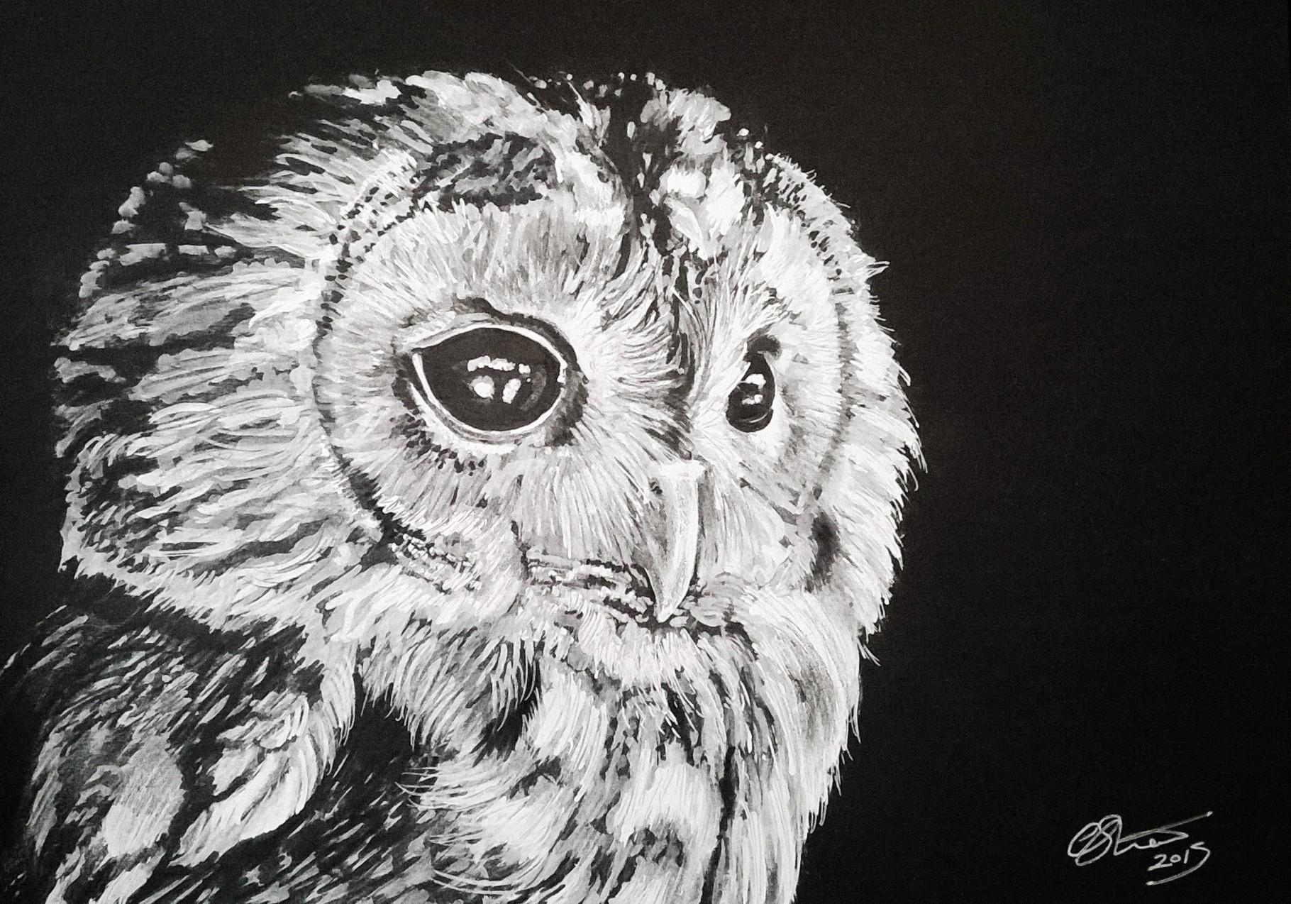 Monochrome Owl