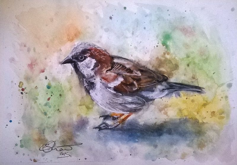 Watercolour Sparrow