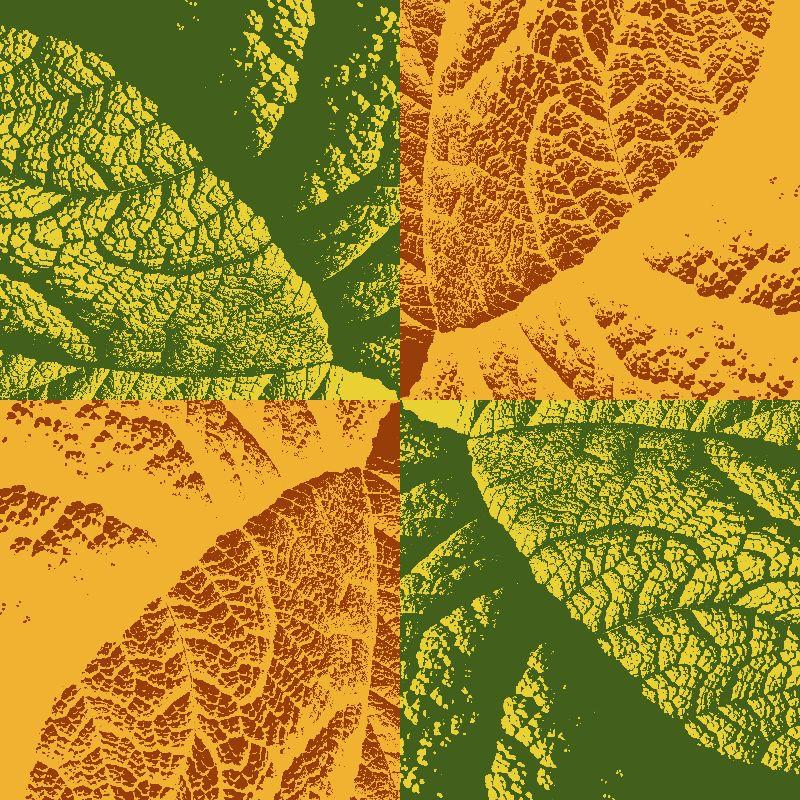 Leaf texture study  dark