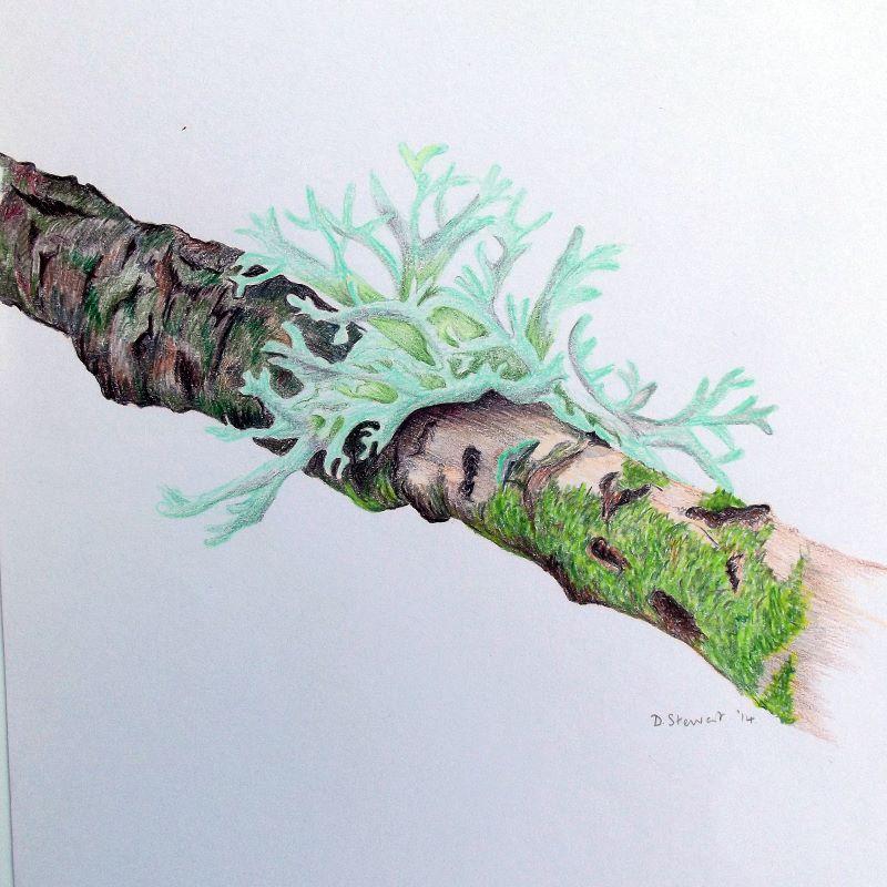 Lichen on Twig