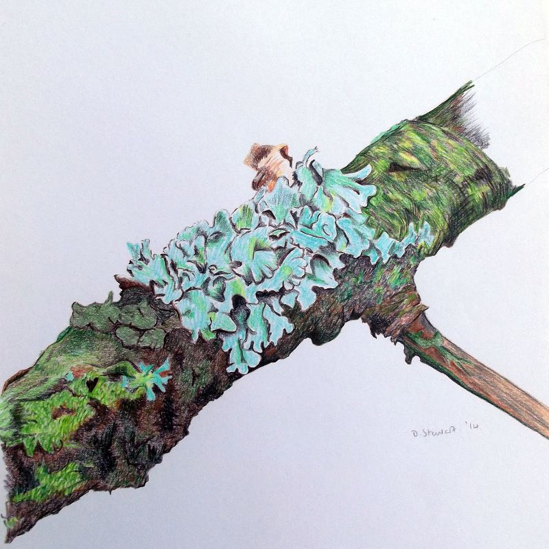 Twig with Lichen