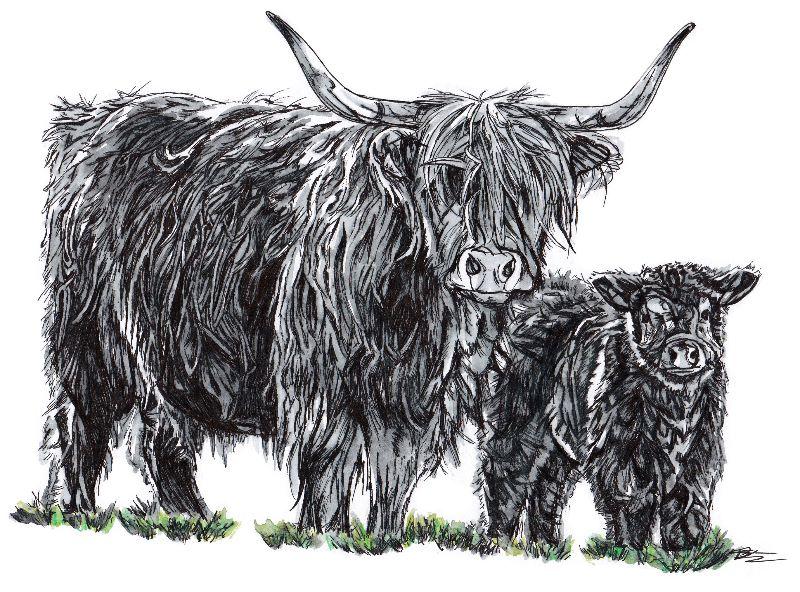 Coo and calf