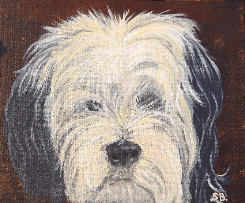 Bertie  Tibetan Terrier