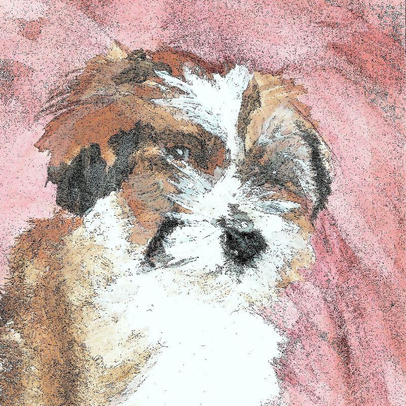 Biggles Pup Valentine