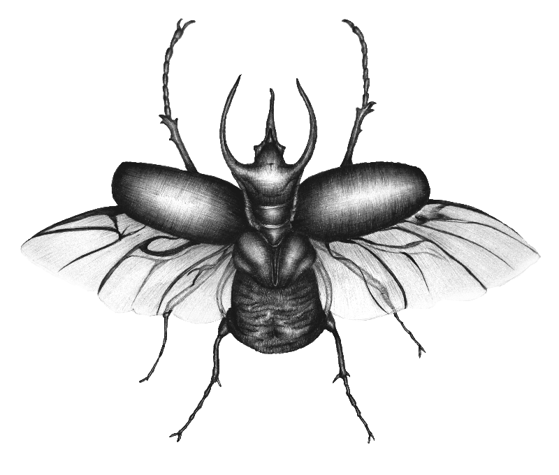 Beetle Wings