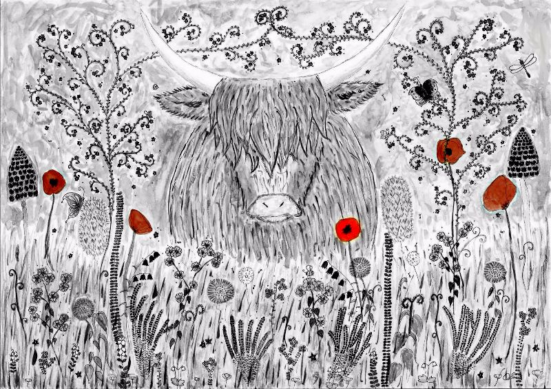 highland cow poppies