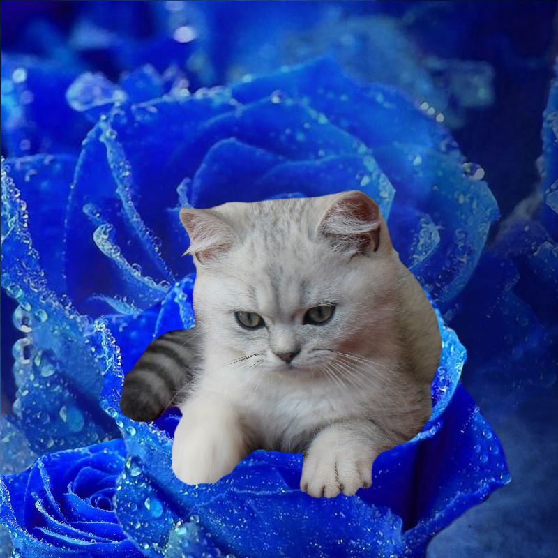 Cat and Blue Rose