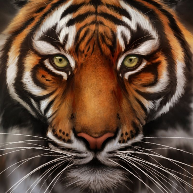 The Tiger Face