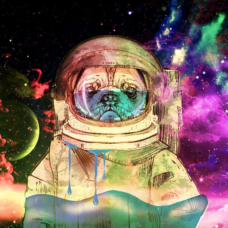 Astronault Pug COLOR
