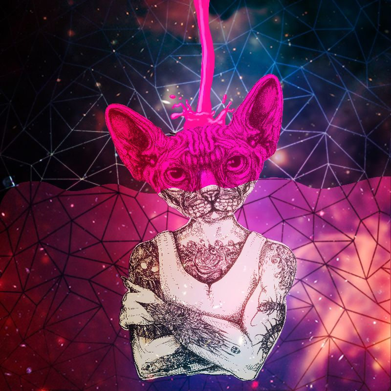 Sphynx COLOR