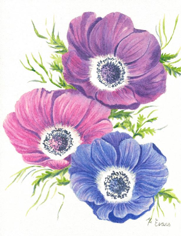 Anemones 3