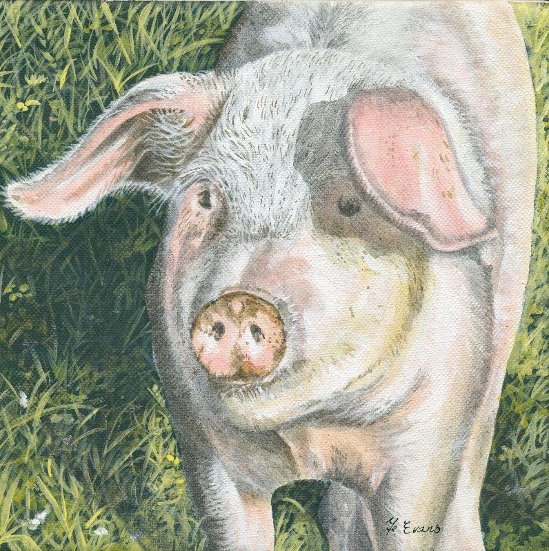 Mucky Pig
