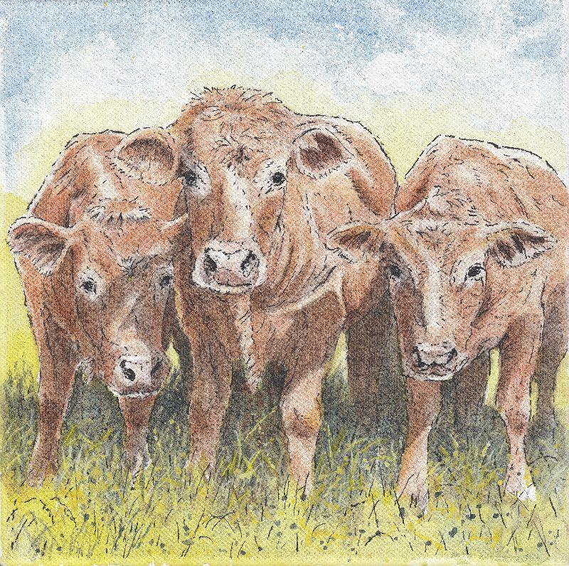 Nosey Cows