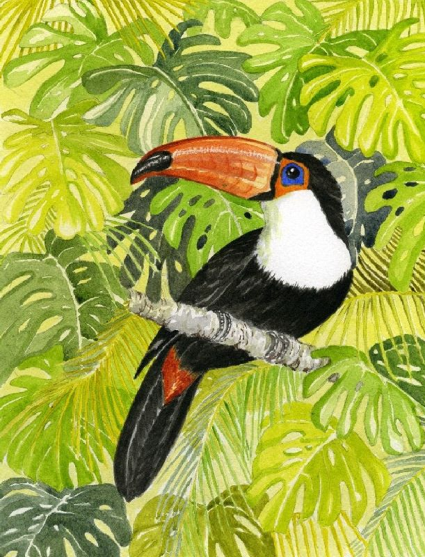 Toucan in Jungle
