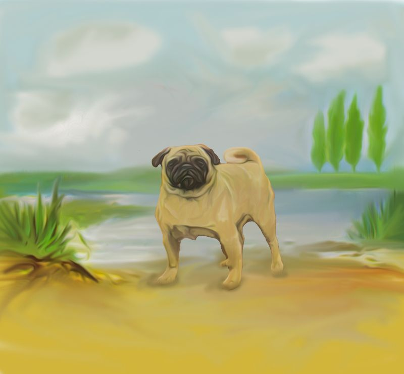 Pug by River