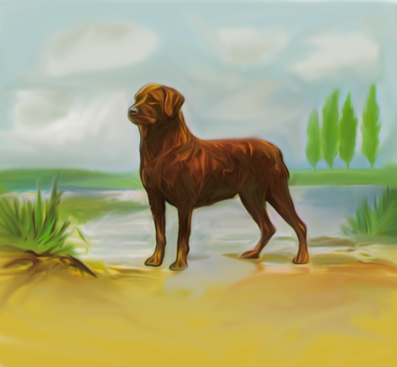 Rotweiler by Riverbank