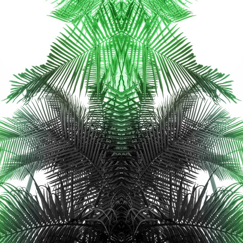 green and gray fern