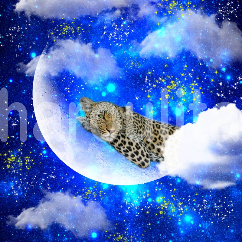 leopard rest in the moon