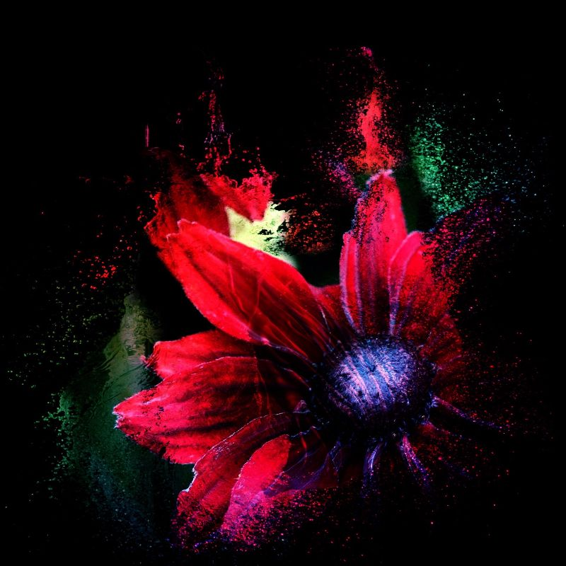 Crimson Petal Explosion