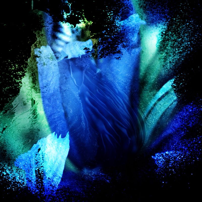 Aqua Iris