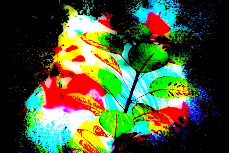 Leafy Paradise