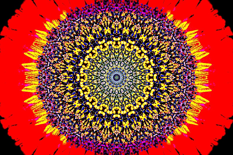 Oval Sunflower