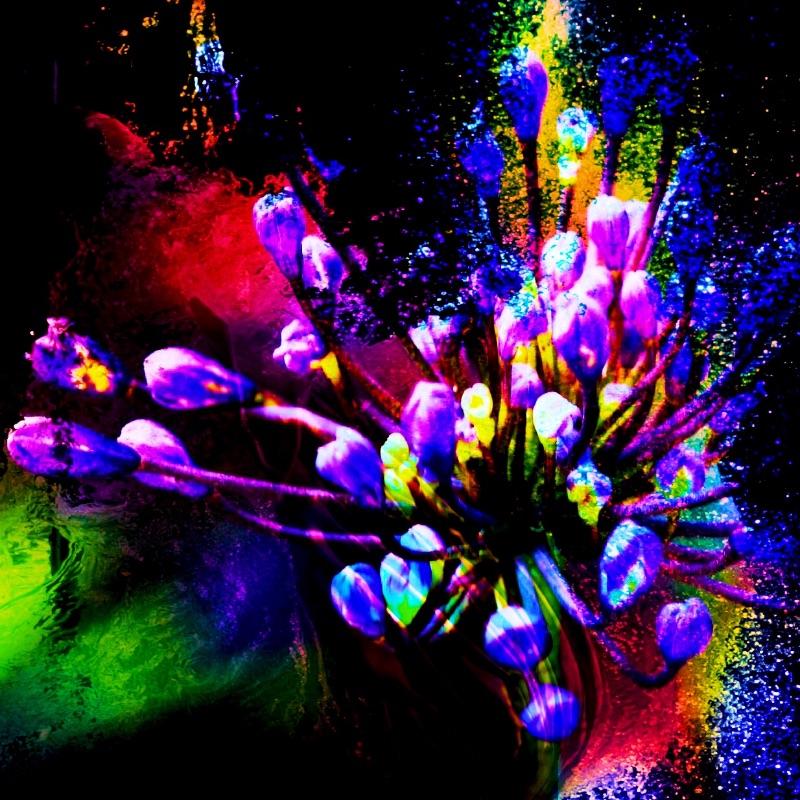Purple Bud Explosion