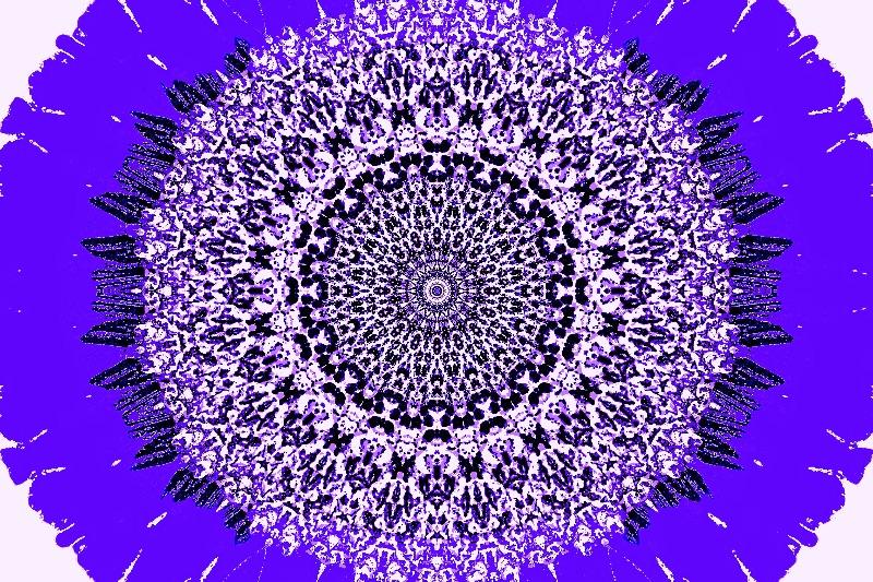 Purple Oval Sunflower
