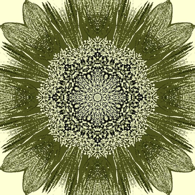 Sunflower Khaki
