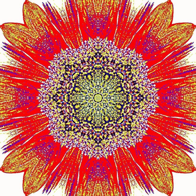 Sunflower Multi