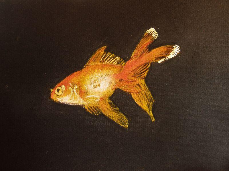 Goldfish on Black