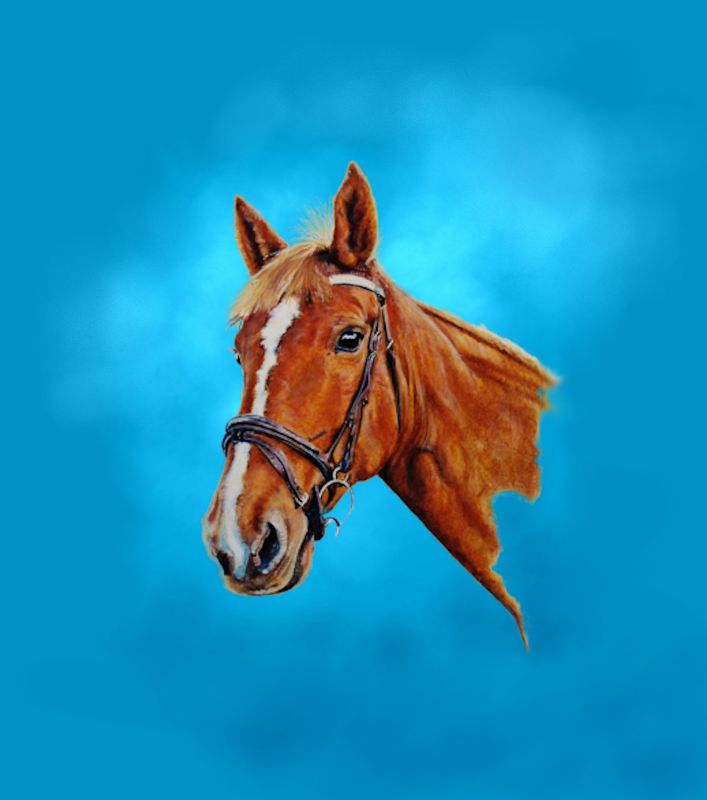 Horse head chestnut mare