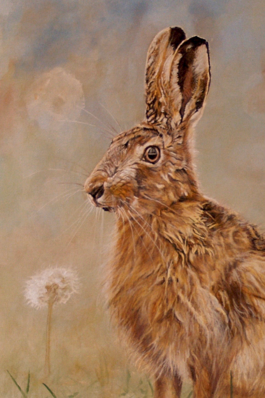 meadow hare and dandelion