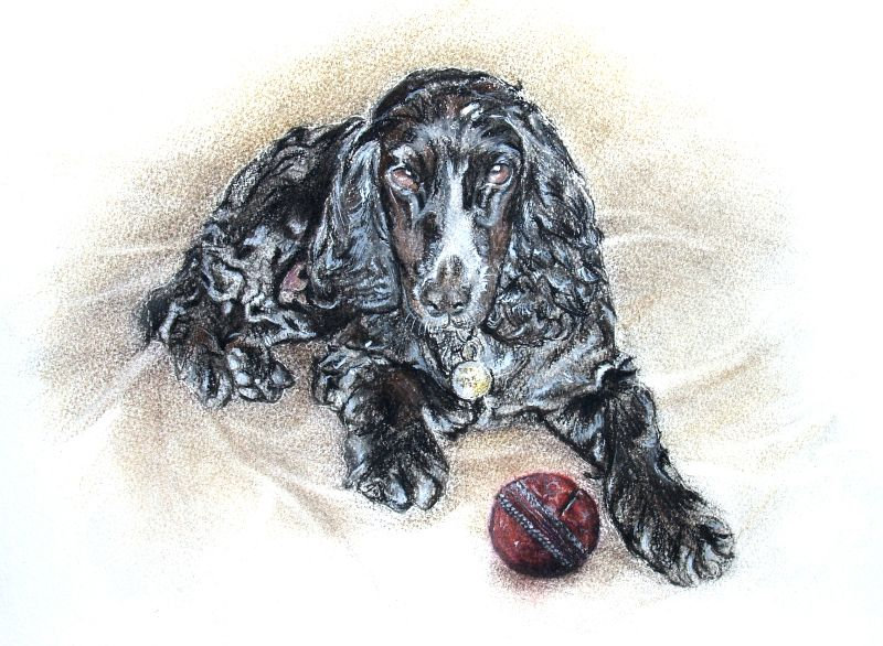 spaniel and cricket ball
