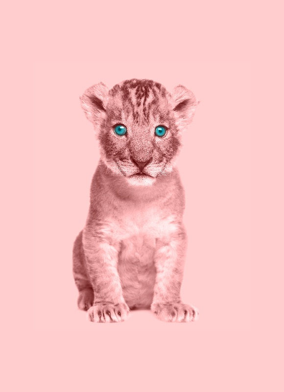 Baby Pink Lion
