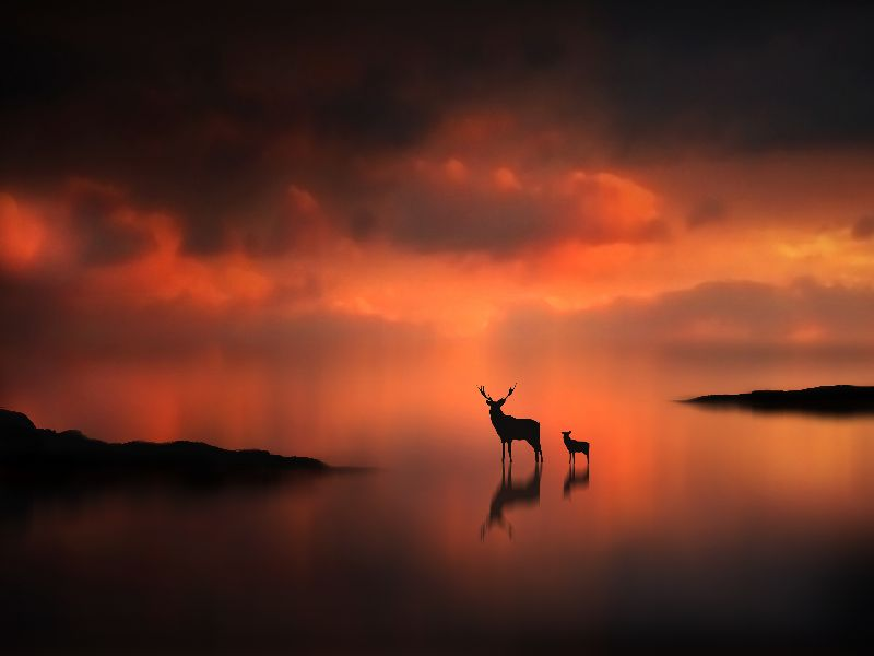 The Deer at Sunset