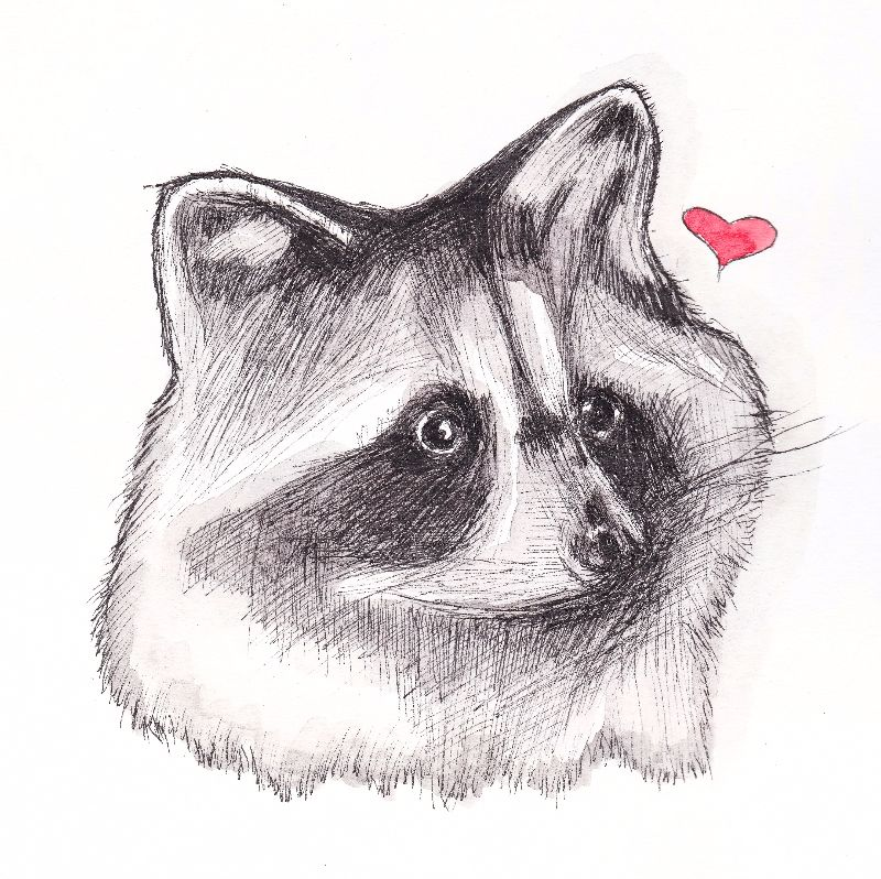 Raccoon Love