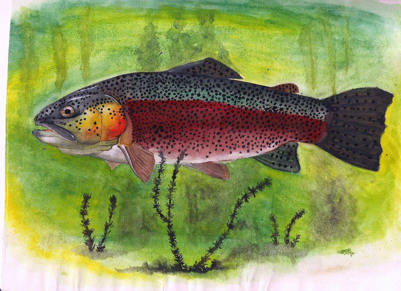 Fish water colour